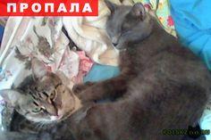 Пропал кот г.Чебоксары http://poiskzoo.ru/board/read32649.html  POISKZOO.RU/32649 Пропал любимый кот! Я инвалид .. группы (Онко) тяжело обходить дворы и подвалы. Кот породы русская голубая, с изъяном: белое пятно на шее и жёлтые глаза. Откликается на имя Лева.   РЕПОСТ! @POISKZOO2 #POISKZOO.RU #Пропала #кошка #Пропала_кошка #ПропалаКошка #Чебоксары