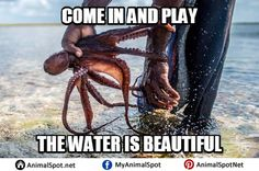 Pictures of Octopus Memes Funny Animal Memes, Funny Animals, Funny Memes, Types Of Octopus, Davy Jones, How To Find Out, Photo Ideas, Creatures, Pictures