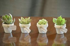 Mini Succulent Favors with Tag in ANY color with Custom Names or Saying- Weddings, Bridesmaids, Place cards, Favors, Gifts Succulent Wedding Favors, Succulent Centerpieces, Succulent Arrangements, Cacti And Succulents, Planting Succulents, Diy Flowers, Flower Pots, Wedding Flowers, Wedding Shower Favors