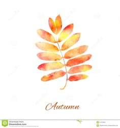 Rowan Leaf Autumn - Download From Over 42 Million High Quality Stock Photos, Images, Vectors. Sign up for FREE today. Image: 51470950