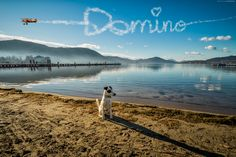 Worthersee Ostbucht mit Domino - Walking the dog. and then suddenly :-) Fox Terrier, Dog Walking, Suddenly, Mountains, Landscape, Water, Dogs, Travel, Outdoor