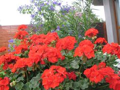magdi Container Gardening, Gardens, Flowers, Plants, Floral, Garden, Plant, Container Garden, Royal Icing Flowers