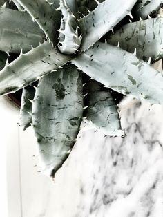 Marble, cactus, green gray