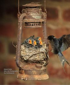 One great way to attract birds to your garden is by providing them with a comfortable nest in which they would definitely continue returning. Believe it or not, there are bird houses that are already made and there are bird house kit Pretty Birds, Love Birds, Beautiful Birds, Animals Beautiful, Beautiful Family, Beautiful Pictures, Animals And Pets, Baby Animals, Cute Animals