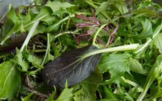 Salad could be to blame for E. Pureed Food Recipes, Spinach, Leaves, Salad, Vegetables, Eat, Plants, Veggie Food, Flora