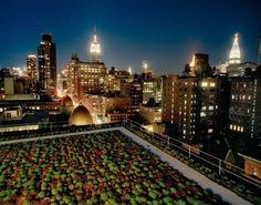 Cook + Fox, Nueva York. Greenpeace.