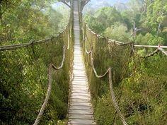 Pont de singe sur la canopée de Bukit Bankirai.