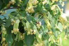 Bylinky môžete začať sušiť práve teraz. Tieto tri určite využijete - Záhrada.sk Plants, Plant, Planets