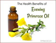 You'll find evening primrose oil benefits in variety of ways. It can help with menopausal hot flashes, high cholesterol, diabetes, chronic fatigue, and MS. Natural Home Remedies, Herbal Remedies, Evening Primrose Oil Benefits, Oils For Life, Vegetarian Lifestyle, Healing Herbs, Alternative Health, Natural Health, Health Benefits