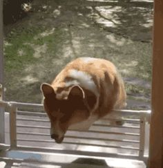 Organization Job - http://bigappleorganizers.com/ - fail life corgi fence April 8 2016 at 01:42PM