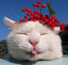 Shiro's festive berry hat