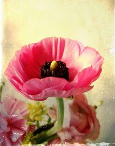Bohemian Art Print, flower, vintage, floral, pink