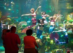 Mermaid show at Silverton Casino in Las Vegas