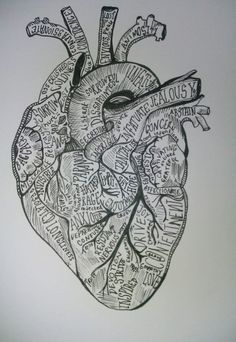 heart anatomy | Tumblr