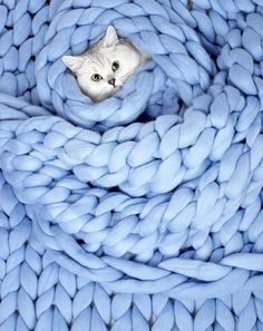 63 Ideas knitting aesthetic blue 63 Ideas knitting aesthetic blue Always wanted to discover how to knit, but unclear wh. Light Blue Aesthetic, Blue Aesthetic Pastel, Aesthetic Colors, Chunky Blanket, Blue Blanket, Wool Blanket, Everything Is Blue, Bleu Pastel, Knitted Cat