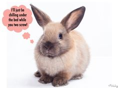 Pet Bunnies & 9 Other Random Things That Will Send A Woman Screaming From Your Bed
