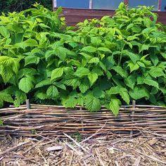 30+ Garden Projects using Sticks & Twigs