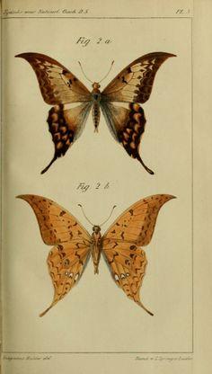 Tijdschrift voor Natuurlijke Geschiedenis en Physiologie (Magazine for Natural History and Physiology), vol.5, 1834