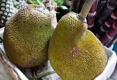 It used to be that once in a while hunks of fresh jackfruit would pop up randomly at some Asian and Hispanic markets in my neck of the woods causing me to mentally squeal with delight at such a rar… Ripe Jackfruit, Jackfruit Tree, Healthy Dishes, Vegan Dishes, How To Prepare Jackfruit, Recipes Using Jackfruit, Jackfruit Benefits, Drinking Around The World, Kitchens