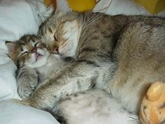 Super Funny – Sleeping Position of Cats