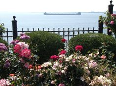 August 2013: the Rose Garden in Duluth, Minnesota