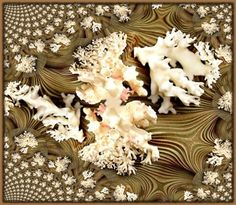 coral_fractal_main