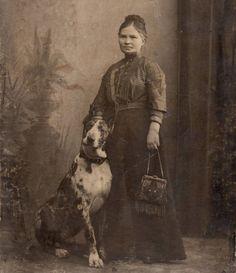 Gran Danes- harlequin-Alewmania-1885 colección C.H.