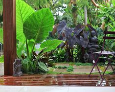 Exotic tropical gardens are a beautiful addition to a home. Exotic tropical gardens make use of plants and flowers native to the warm, humid climate of the tropics. Tropical Garden Design, Tropical Backyard, Backyard Garden Design, Tropical Landscaping, Garden Landscape Design, Tropical Plants, Backyard Landscaping, Tropical Gardens, Backyard Patio