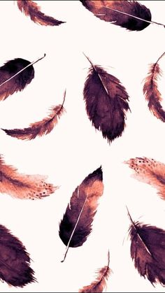Feathers | beautiful | wallpaper
