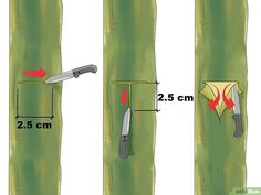Image titled Graft a Tree Step 3 - Moja strona Grafting Fruit Trees, Grafting Plants, Pruning Fruit Trees, Trees To Plant, Citrus Trees, Peach Trees, Veg Garden, Garden Trees, Permaculture Design