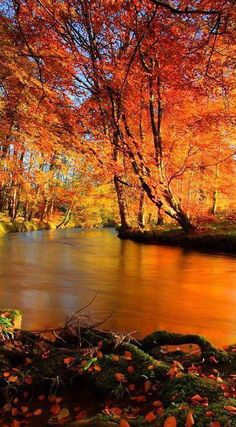 Herbst am Fluss entlang.- Herbst am Fluss entlang. Source by tobecreative Fall Pictures, Nature Pictures, Landscape Photography, Nature Photography, Beautiful Places, Beautiful Pictures, Autumn Scenes, Belle Photo, Beautiful Landscapes