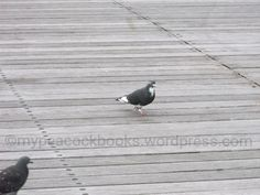 The individual pigeon