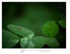 Orlando Photographer| Landscape Photography| Sliwa Studios Photography| Daddy Long Leg Spider