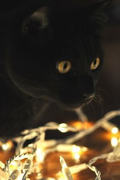 Black cat with golden eyes. another Wednesday look alike!