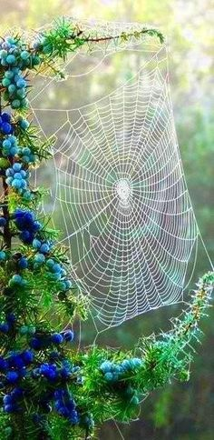 This photo stood out to me due to the fine quality seen from the spider web, i also really love the vibrant blue of the berries, this photo looks almost set up.