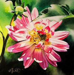Mother's Day Dahlia, painting by artist Jacqueline Gnott