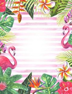 Tropical Jungle Flamingo Patterns Strips Photography Backdrop lv-242 Flamingo Birthday, Flamingo Party, Flamingo Wallpaper, Aloha Party, Invitation Background, Flamingo Pattern, Tropical Party, Backdrops For Parties, Flower Backgrounds