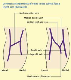 Image result for cubital fossa anatomy