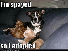 Funny Dog Photos, Even Funnier Captions | www.wftv.com