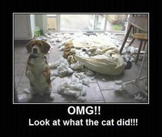 look at what the cat did, funny animals
