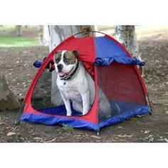The Complete Camping Checklist for Dogs