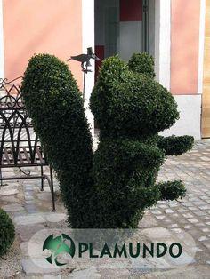 buchsbaum schneiden formschnitt topiary pinterest. Black Bedroom Furniture Sets. Home Design Ideas