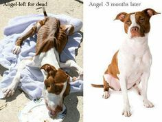 Before/After Adopt A Pit Bull! Adopt a pitty! Rescue Dogs, Animal Rescue, Que Horror, Angel Stories, Stop Animal Cruelty, Pit Bull Love, Pit Bulls, Mans Best Friend, Beautiful Creatures