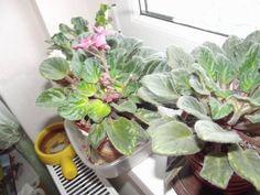 fokföldi_turánné Szolnoki Valéria2 Vegetables, Plants, Vegetable Recipes, Plant, Veggies, Planets