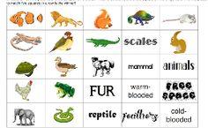 Mammal Classification Worksheet Science Science