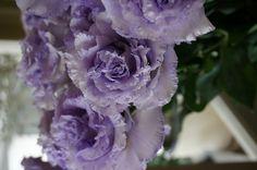 eustoma Corsage otona-lavender