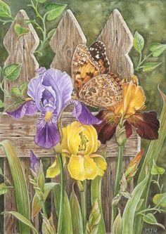 Irises and Butterfly by Martin Ryan Iris Flowers, Exotic Flowers, Bird Pictures, Pictures To Paint, Art Floral, Watercolor Flowers, Watercolor Paintings, Butterfly Painting, Silk Art