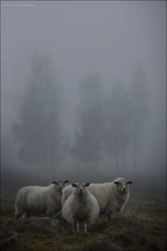 .this is the greatest sheep picture EVER!