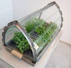 A portable greenhouse for growing herbs at home, designed by Van Eijk &… Growing Herbs At Home, Grow Home, Portable Greenhouse, Mini Greenhouse, Balcony Garden, Herb Garden, Gardening Zones, Terrarium Plants, Urban Farming
