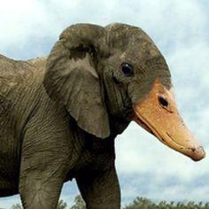 Afbeeldingsresultaat voor hybrid animals